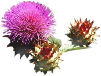 Scottish Gardeners' Forum