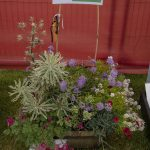 Banchory Horticultural Society B 1st In Group Pallets