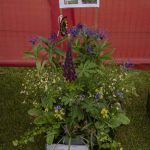 Banchory Horticultural Society 2nd In Group Pallets
